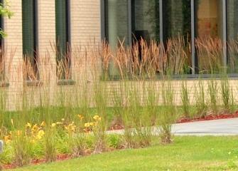 SCMH garden